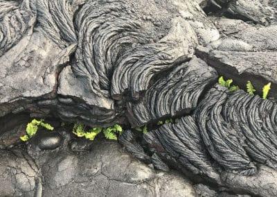 Volcano-National-Park-Hawaii-Hiking-Trail-4
