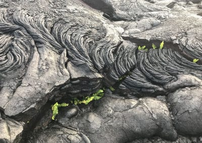 Volcano-National-Park-Hawaii-Hiking-Trail-7