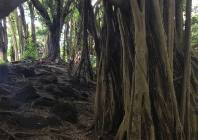 rainbow-falls-hiking-trail-hawaii-hikes-11