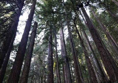 purisima-creek-redwoods-half-moon-bay-hike-1
