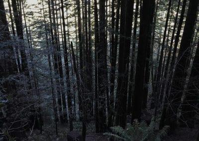 purisima-creek-redwoods-half-moon-bay-hike-10