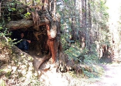 purisima-creek-redwoods-half-moon-bay-hike-12