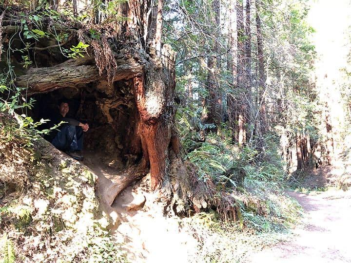 purisima-creek-redwoods-half-moon-bay-hike-12