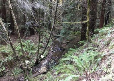 purisima-creek-redwoods-half-moon-bay-hike-20