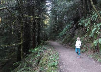 purisima-creek-redwoods-half-moon-bay-hike-21