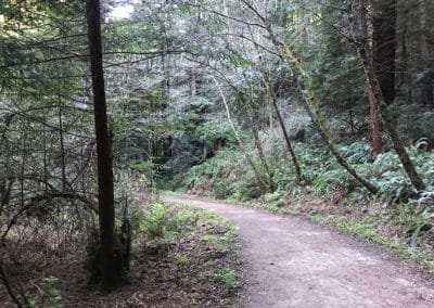 purisima-creek-redwoods-half-moon-bay-hike-23