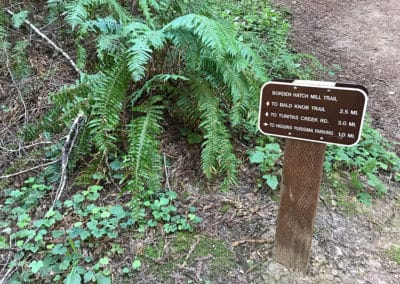 purisima-creek-redwoods-half-moon-bay-hike-24