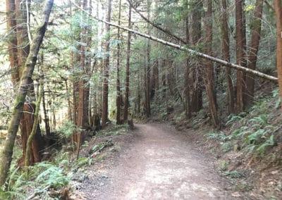 purisima-creek-redwoods-half-moon-bay-hike-25