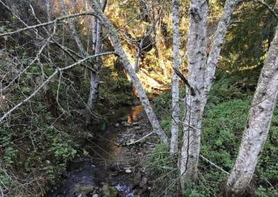 purisima-creek-redwoods-half-moon-bay-hike-26