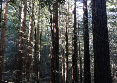 purisima-creek-redwoods-half-moon-bay-hike-8