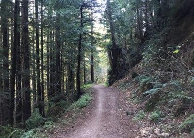 purisima-creek-redwoods-half-moon-bay-hike-9