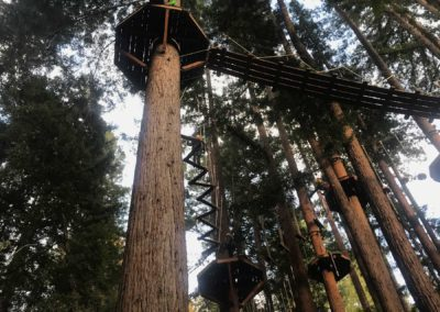 mount-hermon-adventure-redwood-canopy-tours-zipline-fun-10