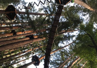 mount-hermon-adventure-redwood-canopy-tours-zipline-fun-8