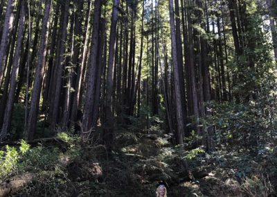 rincon-hiking-trail-santa-cruz-redwoods-hiking-trail-11