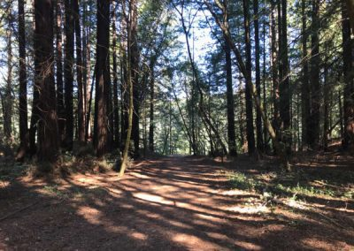 rincon-hiking-trail-santa-cruz-redwoods-hiking-trail-13