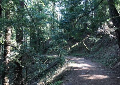 rincon-hiking-trail-santa-cruz-redwoods-hiking-trail-14