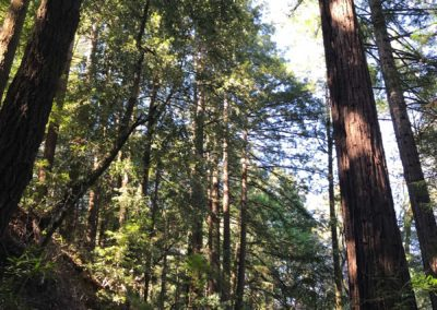 rincon-hiking-trail-santa-cruz-redwoods-hiking-trail-15