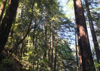 rincon-hiking-trail-santa-cruz-redwoods-hiking-trail-16