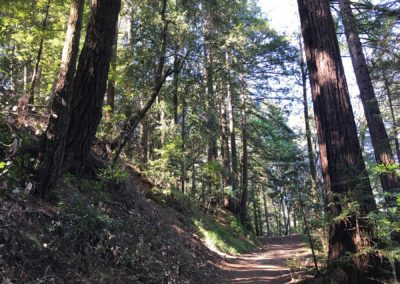 rincon-hiking-trail-santa-cruz-redwoods-hiking-trail-17