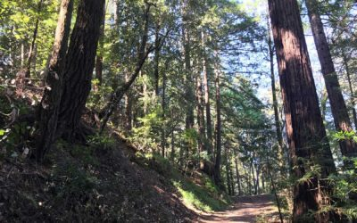 Santa Cruz Redwoods Hiking Trail | Rincon Fire Road Trail