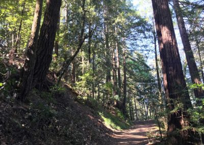 rincon-hiking-trail-santa-cruz-redwoods-hiking-trail-18