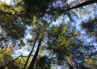 rincon-hiking-trail-santa-cruz-redwoods-hiking-trail-19