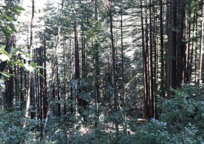 rincon-hiking-trail-santa-cruz-redwoods-hiking-trail-2