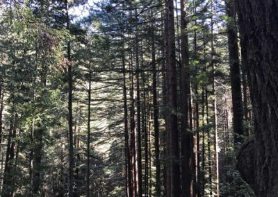 rincon-hiking-trail-santa-cruz-redwoods-hiking-trail-3