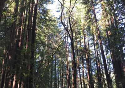 rincon-hiking-trail-santa-cruz-redwoods-hiking-trail-4
