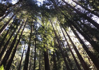 rincon-hiking-trail-santa-cruz-redwoods-hiking-trail-6
