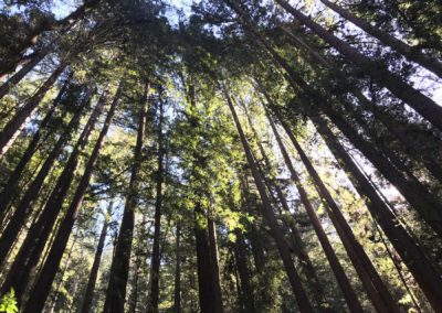 rincon-hiking-trail-santa-cruz-redwoods-hiking-trail-7