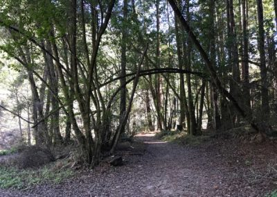 rincon-hiking-trail-santa-cruz-redwoods-hiking-trail-9