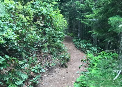 seattle hiking trail, seattle hikes, mount rainer hikes, mount rainer, mt rainer hikes, mount rainer hiking trails