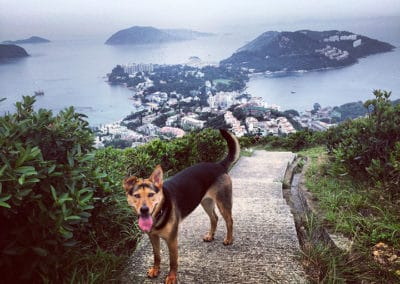 hong-kong-the-twins-violet-peak-hiking-trail-13